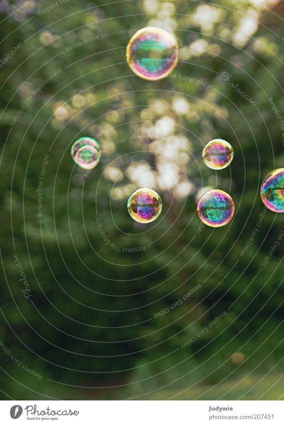 Sommerliche Leichtigkeit. Natur grün Sonne Sommer Ferien & Urlaub & Reisen Spielen Freiheit Umwelt Glück träumen Luft Stimmung Kindheit fliegen rund Wunsch