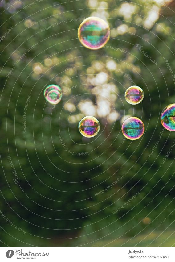 Sommerliche Leichtigkeit. Spielen Ferien & Urlaub & Reisen Freiheit Umwelt Natur Sonne Schönes Wetter Seifenblase Blase fantastisch mehrfarbig grün Stimmung