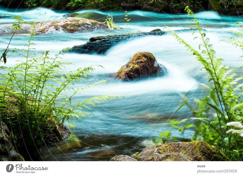 Stromschnelle Abenteuer Umwelt Natur Landschaft Pflanze Wasser Klima Gras Sträucher Farn Grünpflanze Wildpflanze Felsen Flussufer Bach Stein entdecken