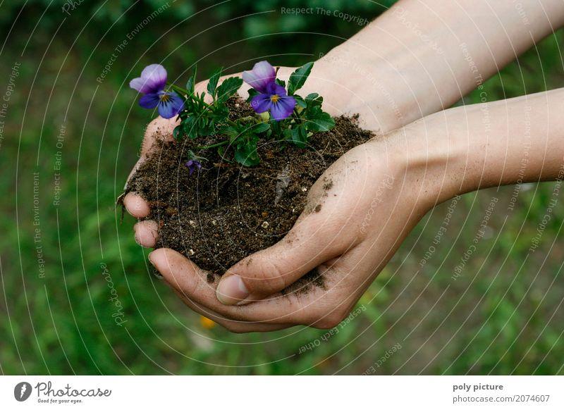 Stiefmütterchen in der Hand Mensch Kind Frau Natur Ferien & Urlaub & Reisen Jugendliche Mann Pflanze Sommer Stadt Farbe schön grün Blume ruhig