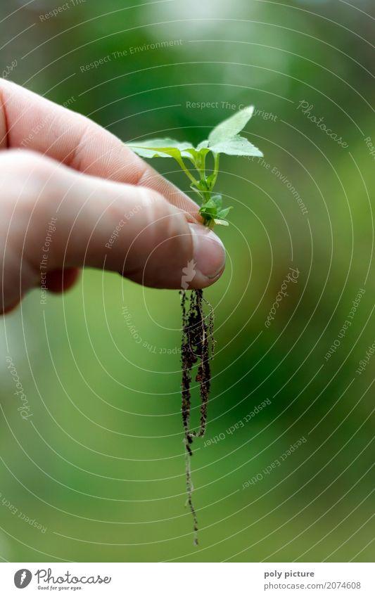 Sprössling Sommer Garten Kind Arbeit & Erwerbstätigkeit Gartenarbeit Landwirtschaft Forstwirtschaft Finger Umwelt Natur Pflanze Erde Sand Frühling Blume Blatt