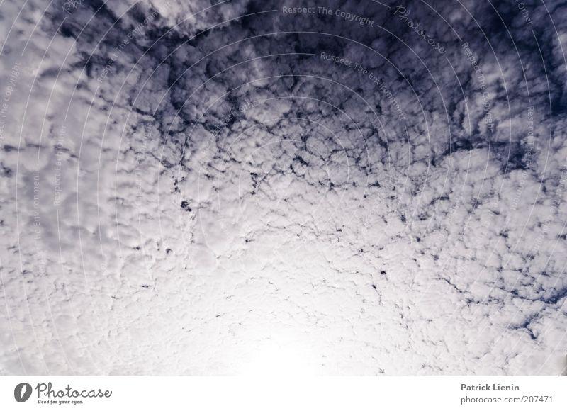 Butterflies and Hurricanes Umwelt Natur Landschaft Urelemente Luft Himmel nur Himmel Wolken blau weiß grau bedeckt Weitwinkel viele Sonne blenden oben leicht