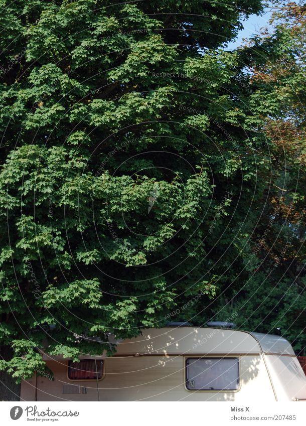 hinterm Rummel Natur Baum grün Ferien & Urlaub & Reisen ruhig Einsamkeit Freiheit Ausflug Platz Tourismus einfach Häusliches Leben Camping Fahrzeug Baumkrone