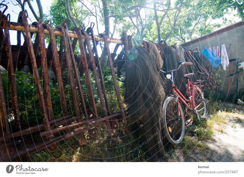 Fisherman's Fahrrad Baum rot Sommer Wärme Verkehr Netz Klima leuchten Rad Zaun Schönes Wetter Wäsche Hinterhof Verkehrsmittel Umwelt