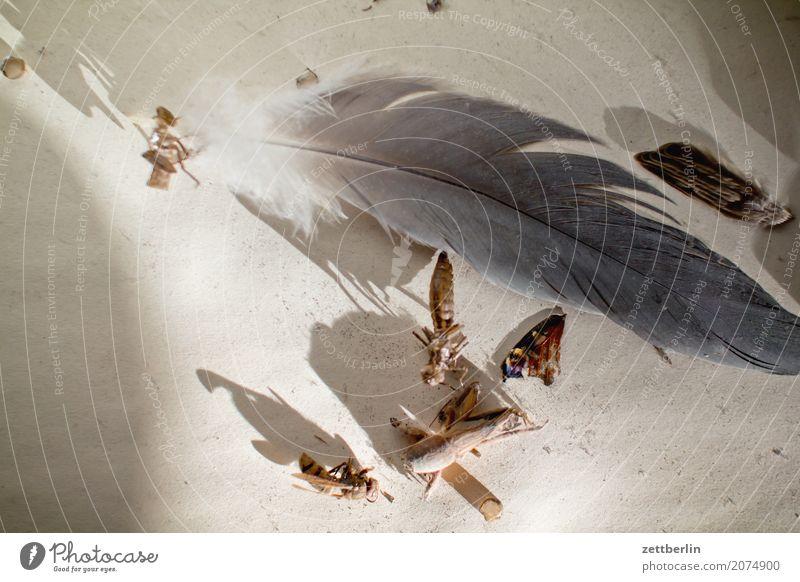 Tote Tiere Sonne Leben Traurigkeit Tod grau Vogel Textfreiraum Feder Flügel Trauer Insekt Schmetterling Umweltschutz Zoo Lebenslauf