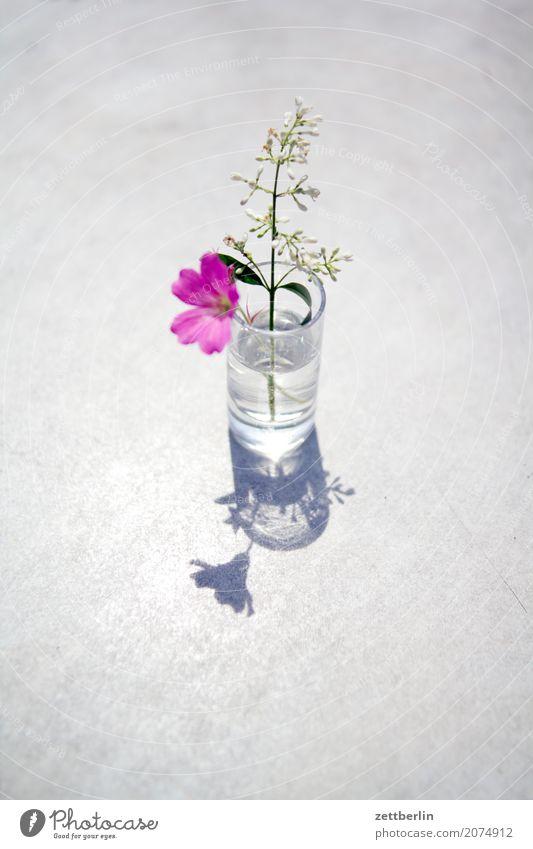 Bitte! Für Bitti! Himmel Natur Ferien & Urlaub & Reisen Pflanze Sommer Baum Blume Erholung ruhig Blüte Wiese Gras Garten Textfreiraum Glas Sträucher