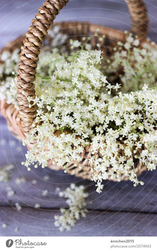 Blütenliebe weiß Natur grün Korb Holunderbusch Holunderblüte braun zart Innenaufnahme Detailaufnahme Sammlung ansammeln Ernte Sirup