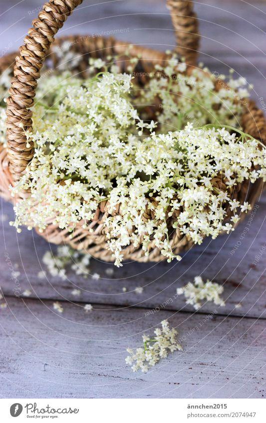 Holunderblüten Blüte Natur weiß Ernte Sommer Frühling Korb zart klein grün Innenaufnahme Pflanze Sammlung ansammeln Suche