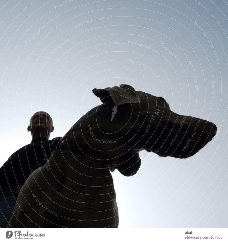 Freunde Mensch Hund Mann blau Tier schwarz Erwachsene Freundschaft Zusammensein Zufriedenheit Kraft warten maskulin ästhetisch stehen beobachten