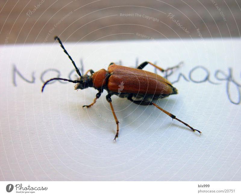 Überraschungsbesuch Tier Insekt Verkehr Käfer Natur