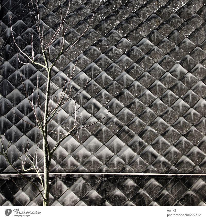 Vorstadt Natur alt Baum Pflanze Winter Haus dunkel grau Gebäude dreckig Architektur Fassade einfach fest Quadrat