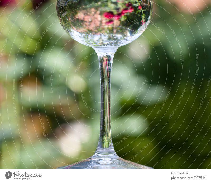 Rosen im Glas Stil Dekoration & Verzierung Blume Blüte Lupe Blumenvase Wasser Duft glänzend dünn mehrfarbig schön ästhetisch elegant Symmetrie Farbfoto