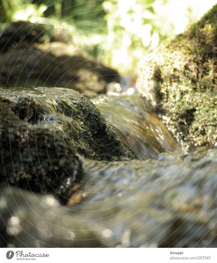 Stones Wohlgefühl Freiheit Sommer Sommerurlaub Berge u. Gebirge Umwelt Natur Pflanze Wasser Schönes Wetter Gras Moos Wildpflanze Flussufer Bach braun grün