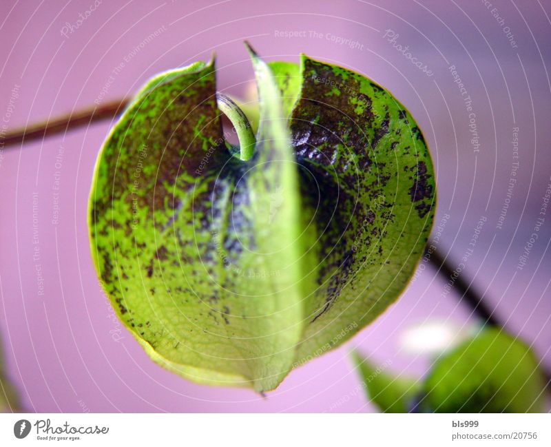 Fremde Welten Natur Blume grün Pflanze