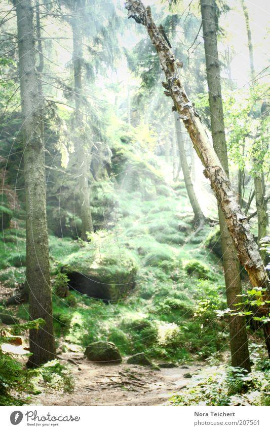 märchenwald Natur grün schön Baum Pflanze Sommer ruhig Wald Leben Landschaft Umwelt Gras Stein träumen Stimmung Felsen
