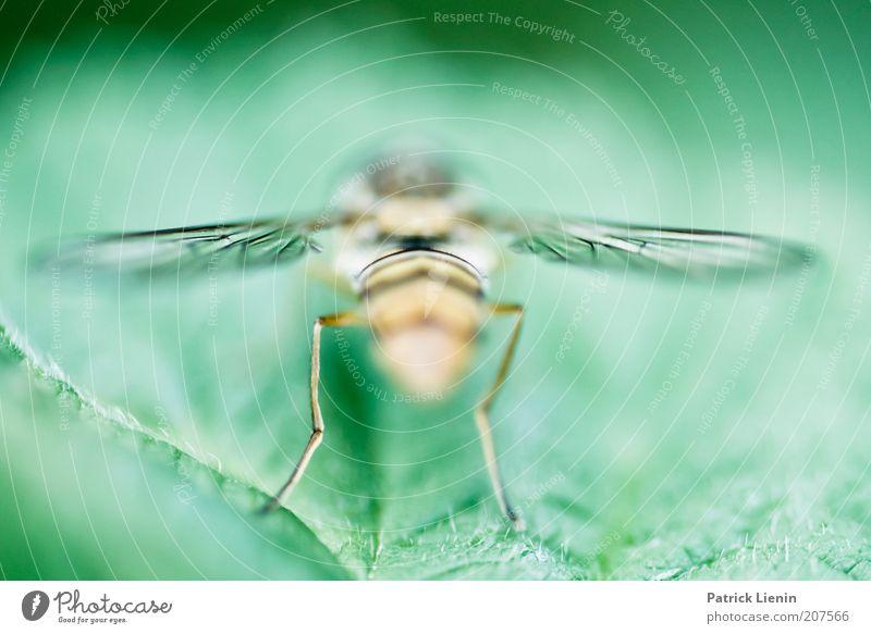 Rückansicht Pflanze ruhig Blatt Tier Beine Hinterteil Flügel Insekt Wildtier