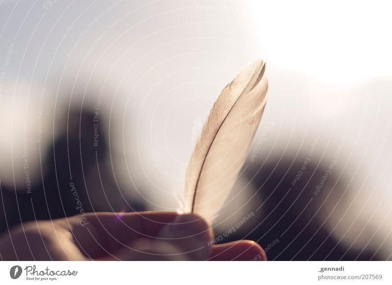 Federleichte Leichtigkeit Hand schön weiß Einsamkeit Glück Zufriedenheit frei Finger Fröhlichkeit Feder Sehnsucht natürlich Fernweh Erinnerung Heimweh Mensch
