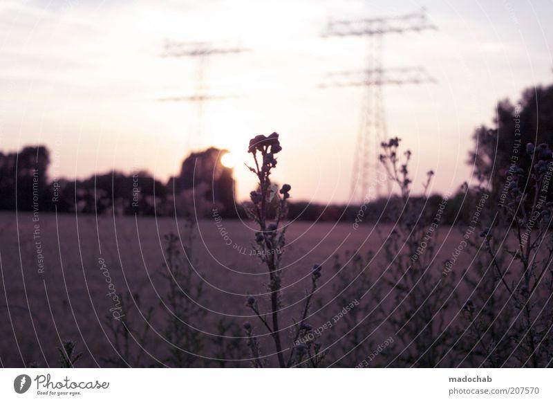 Auf dem Rückweg Landschaft Horizont Sonnenaufgang Sonnenuntergang Sonnenlicht Sommer Wetter Schönes Wetter träumen ästhetisch Glück Wärme Gelassenheit ruhig