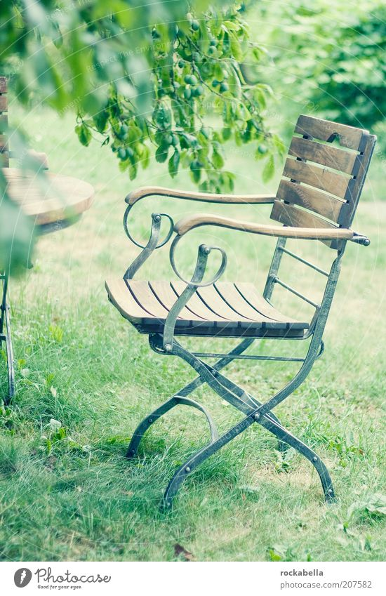 welcome home. Natur grün Sommer ruhig Erholung Stil Garten Park elegant Umwelt leer frisch ästhetisch Pause Stuhl harmonisch