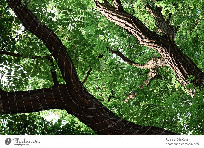 unter Bäumen Natur Baum grün Pflanze Sommer Wald Landschaft braun Umwelt ästhetisch Baumstamm Laubbaum gigantisch Blattgrün Blätterdach