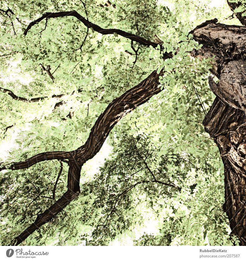 unter Bäumen II Umwelt Natur Sommer Baum alt ästhetisch braun grün weiß Farbfoto Gedeckte Farben Außenaufnahme abstrakt Menschenleer Tag Schatten Kontrast
