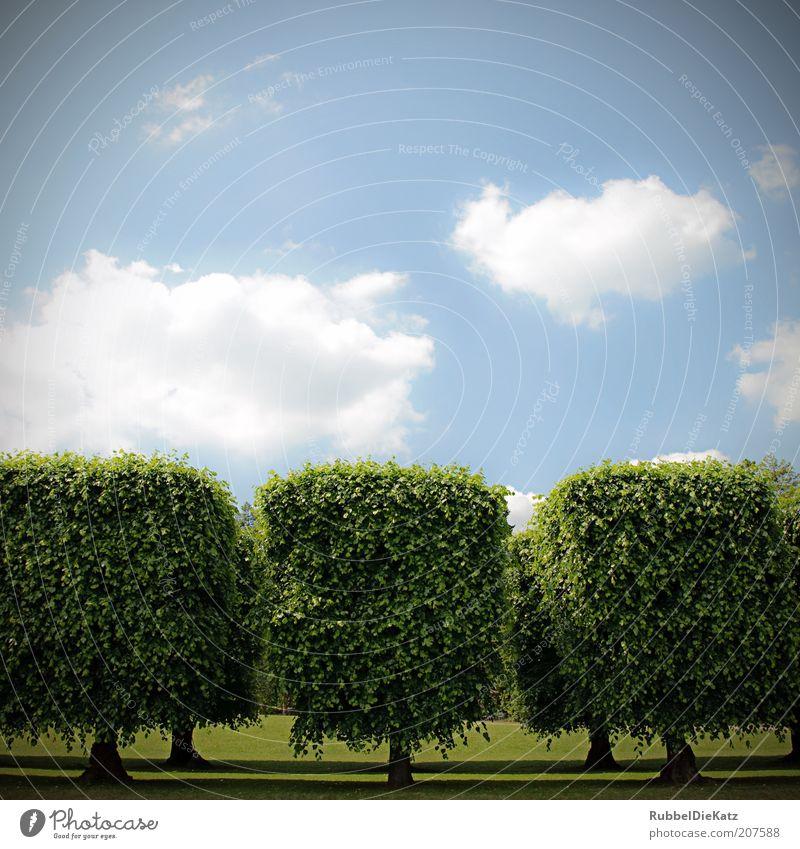 Frisch frisiert Umwelt Natur Landschaft Himmel Wolken Sonnenlicht Frühling Sommer Schönes Wetter Baum Park außergewöhnlich eckig schön blau grün weiß elegant