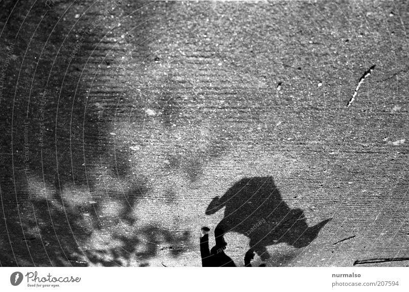 Black Cat Umwelt Natur Sommer Schönes Wetter Tier Haustier Katze 1 Bewegung laufen gruselig Stimmung Leben Rätsel wild Schwanz Betonplatte schleichen analog