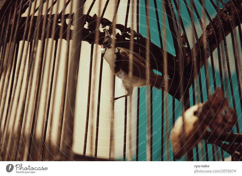 eingesperrt Tier Wildtier Vogel 1 außergewöhnlich exotisch schön Einsamkeit Angst Käfig Freiheitsberaubung Retro-Farben altehrwürdig Farbfoto Außenaufnahme