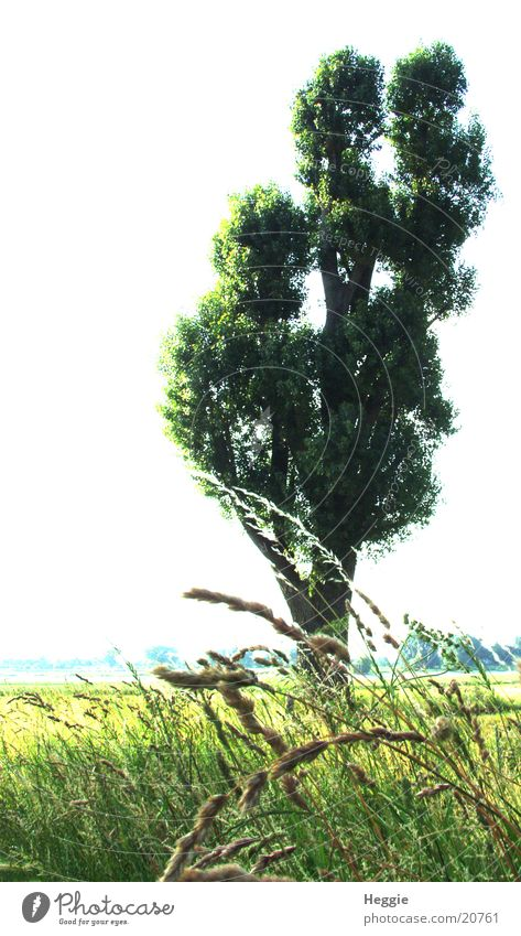 Baum grün Gras Weitwinkel Weide