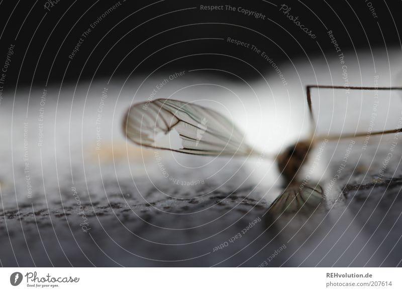 """""""Lass niemals deinen Flügelmann im Stich."""" langbeinig Insekt liegen Tod Loch kaputt Tier Fliege klein Farbfoto Innenaufnahme Nahaufnahme Detailaufnahme"""