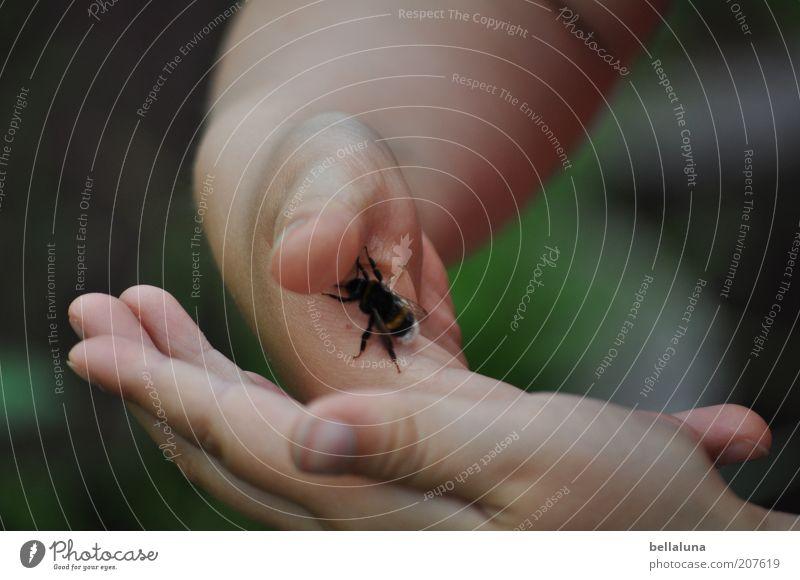 Flieg, kleine Hummel! Mensch Kind Natur Hand Tier feminin Leben Umwelt Kindheit Finger Wildtier festhalten Neugier Insekt berühren Kontakt