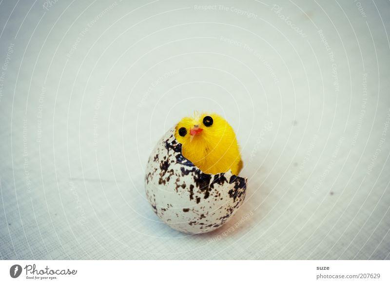 Reifeprüfung gelb lustig Vogel Beginn frisch außergewöhnlich Dekoration & Verzierung neu Kitsch Ostern reif Ei brechen falsch Geburt Vignettierung