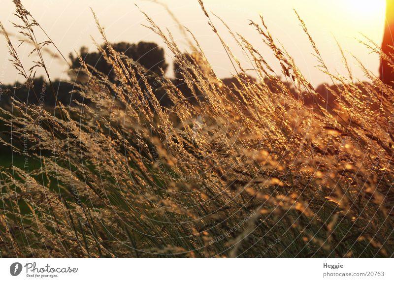 Im Licht Wiese Gras