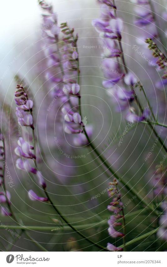 lila Blüten bei Sonnenaufgang Lifestyle Gesundheit Wellness Leben harmonisch Wohlgefühl Zufriedenheit Sinnesorgane Erholung ruhig Meditation Ausflug