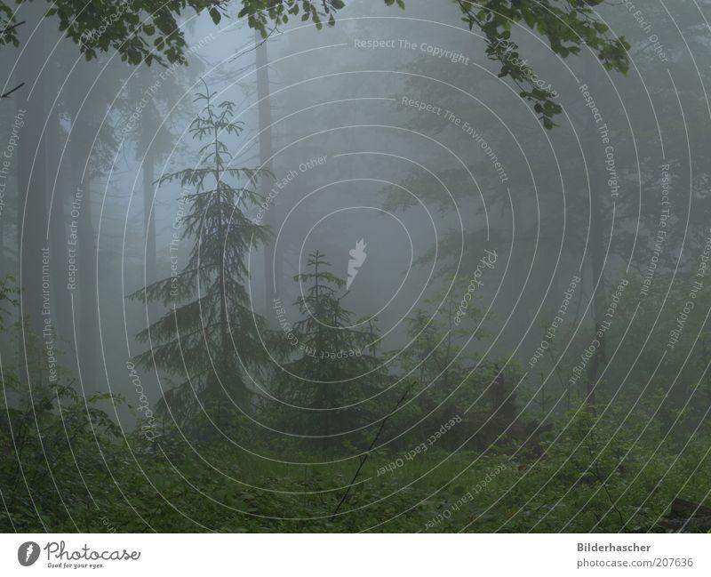 Nebelwald Natur Baum Pflanze ruhig Einsamkeit Wald Landschaft Stimmung Wetter Umwelt nass Sträucher Frieden Klima feucht