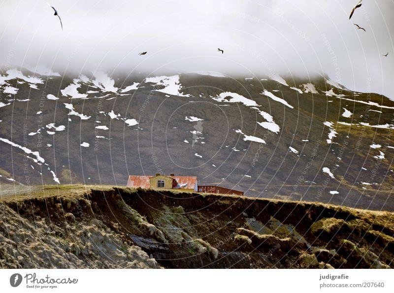Island Natur Himmel Haus Wolken Tier Berge u. Gebirge Gebäude Landschaft Stimmung Vogel Umwelt fliegen Tiergruppe Bauwerk Möwe