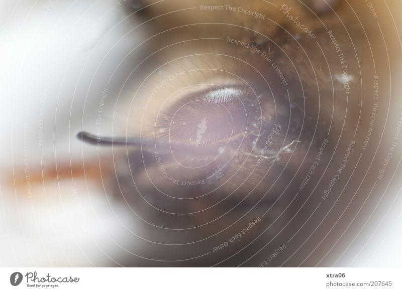 vor lauter angst die brille beschlagen Tier bedrohlich Insekt Auge Retroring Farbfoto Nahaufnahme Detailaufnahme Makroaufnahme Tierporträt Blick in die Kamera