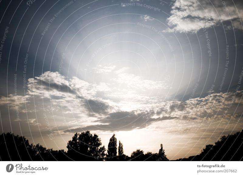 Strahlungsleck Umwelt Natur Landschaft Urelemente Luft Himmel Wolken Horizont Sonne Sonnenaufgang Sonnenuntergang Sonnenlicht Schönes Wetter Baum strahlenförmig