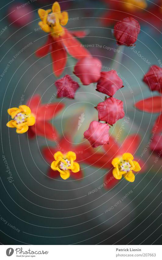 auffällig bunt schön Blume grün Pflanze rot Sommer gelb Blüte hell Perspektive außergewöhnlich exotisch Blütenknospen vertrocknet grell