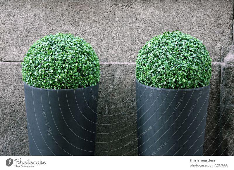 allein dumm rumstehen ist langweilig! Pflanze Sträucher Grünpflanze Mauer Wand Stein Stahl Kugel groß rund grau grün Einigkeit Symmetrie Farbfoto