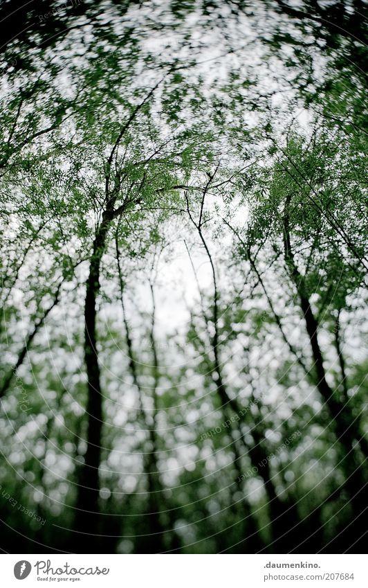 Delirium Natur Himmel Baum Pflanze Wald Bewegung Landschaft Umwelt mehrere Dynamik drehen bizarr Surrealismus Laubbaum himmelwärts
