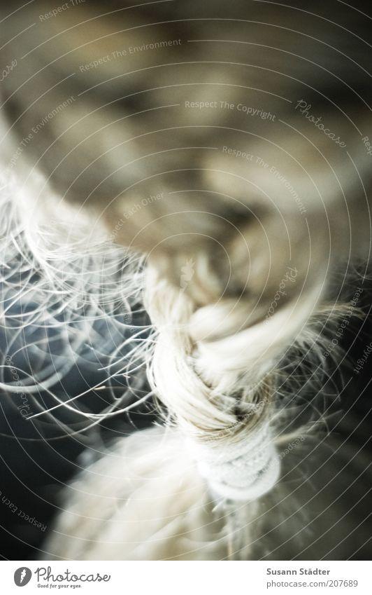 Netzwerk feminin Haare & Frisuren blond Kreativität Zusammenhalt langhaarig Zopf binden geflochten mädchenhaft Hinterkopf Haargummi