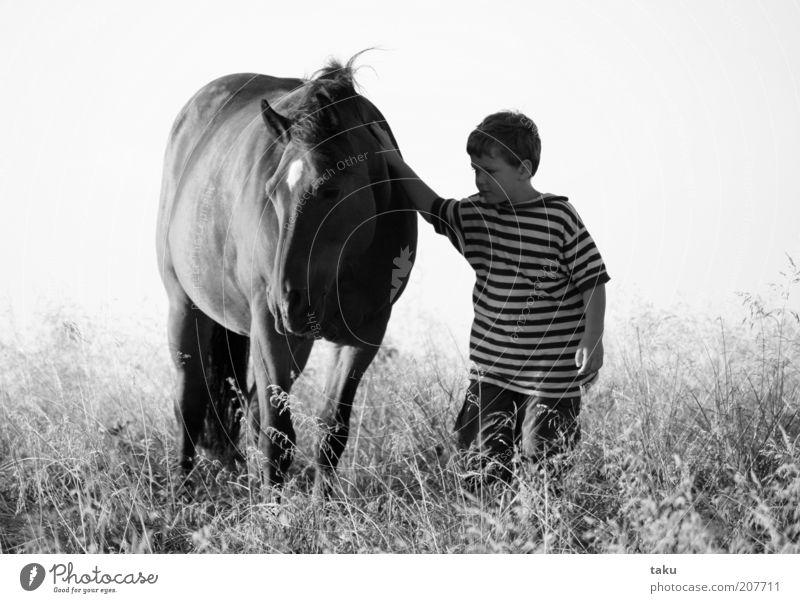 KAI & NATHANEL Mensch Kind Natur Himmel Sommer Ferien & Urlaub & Reisen Tier Wiese Gras Freiheit Landschaft maskulin Ausflug Pferd Abenteuer T-Shirt