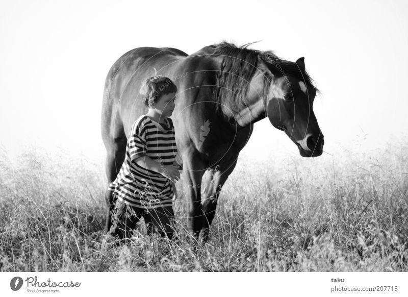 KAI & NATHANEL I Kind Sommer Tier Wiese Freiheit Gras Freundschaft Tierjunges Zusammensein Kraft gehen Abenteuer Pferd Sicherheit authentisch Frieden