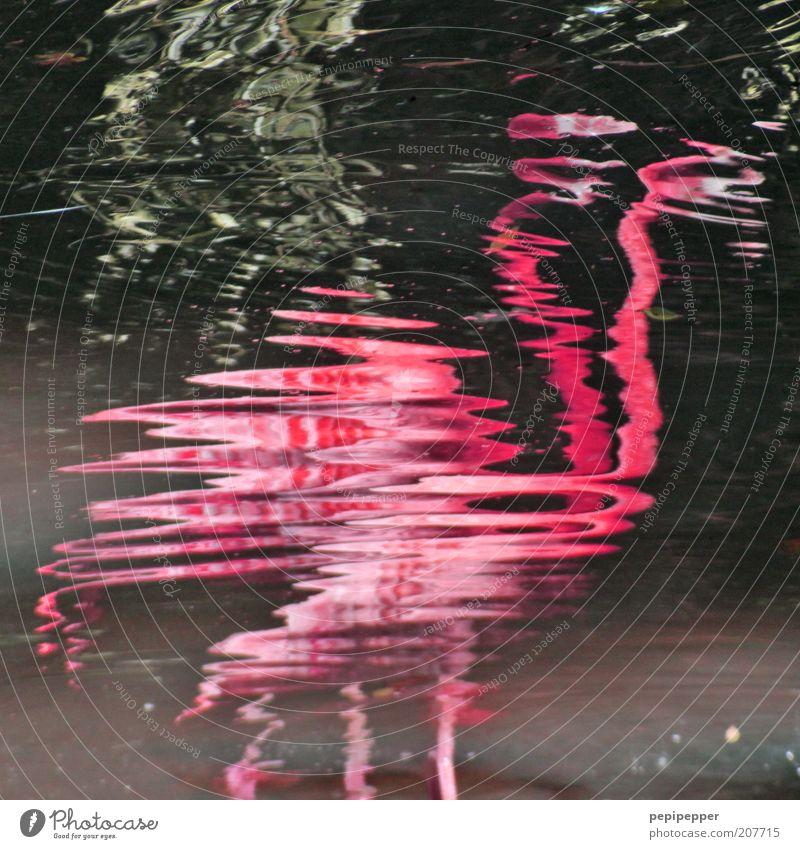 flamin(goes) Wasser Sommer Ferien & Urlaub & Reisen Tier See Landschaft Vogel Tierpaar rosa nass Ausflug Feder Flüssigkeit Wildtier Schönes Wetter Teich