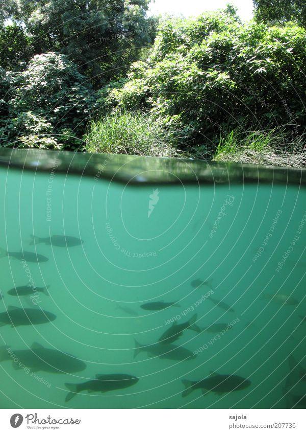 zwischenwelten Natur Wasser grün Pflanze Tier See Landschaft Umwelt Fisch Sträucher Wildtier türkis Seeufer Urelemente Teich