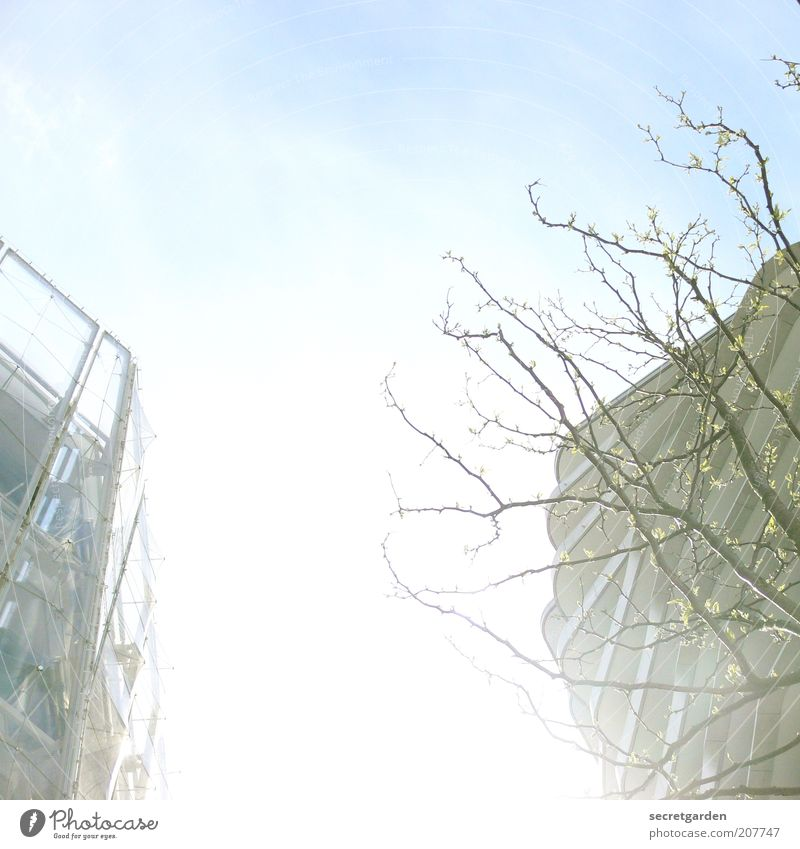 shining. blau weiß Baum Pflanze Haus Umwelt Architektur Frühling Gebäude hell Fassade Hochhaus modern ästhetisch Baustelle