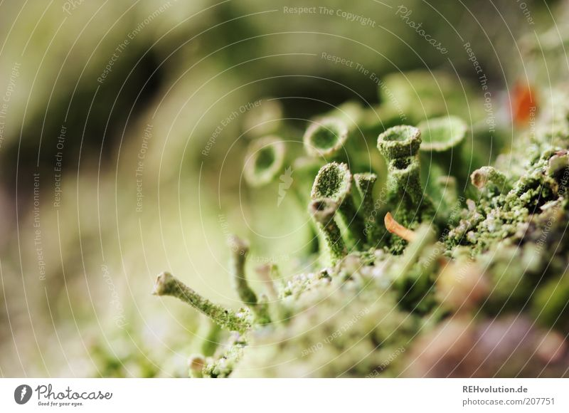 """""""Was heißt eigentlich bizarr?"""" Natur Baum grün Pflanze Sommer Leben braun klein Umwelt ästhetisch Wachstum mehrere natürlich außergewöhnlich Moos"""