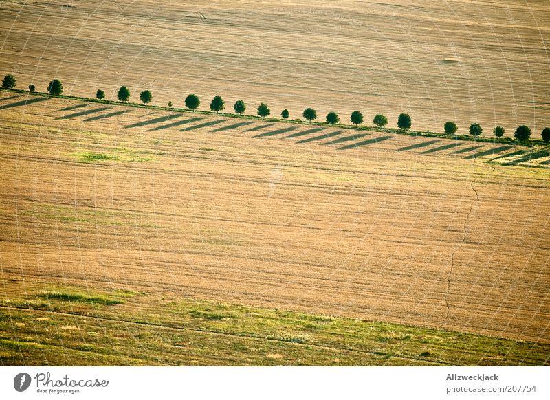schlange stehen Landschaft Sommer Baum Feld ästhetisch Allee Fußweg einfach Ackerbau Farbfoto Außenaufnahme Luftaufnahme Abend Vogelperspektive Baumreihe