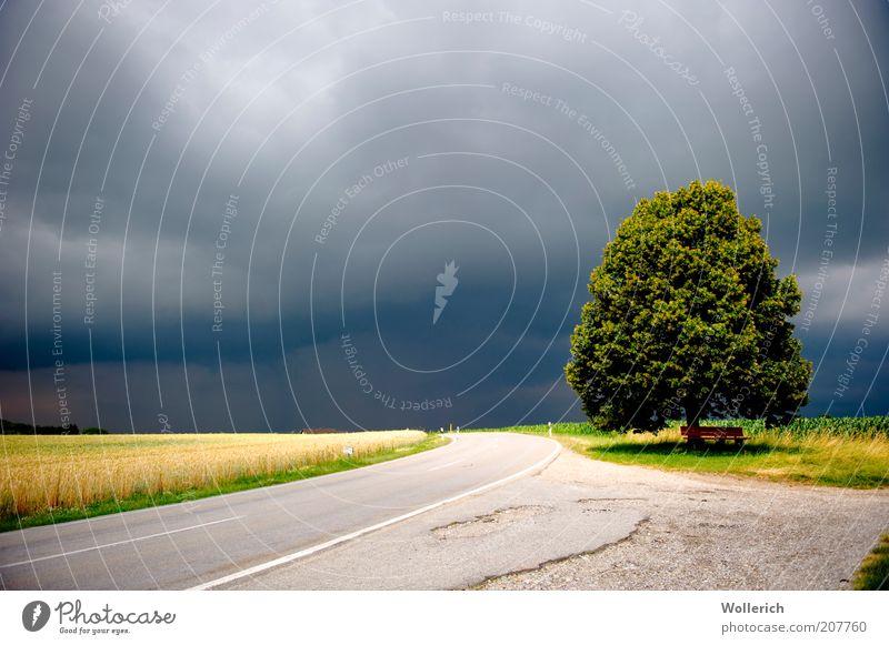 BaumStrasseFeld Himmel Straße dunkel Wege & Pfade Landschaft Wetter nah Asphalt Gewitter Haltestelle Straßenrand Gewitterwolken Nutzpflanze Fahrbahnmarkierung